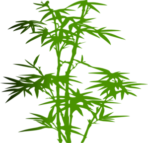 bamboo trees png - photo #19