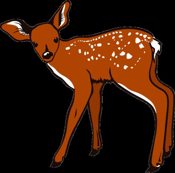 free clipart cartoon deer - photo #16