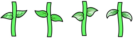 Flower With Stem Template - ClipArt Best