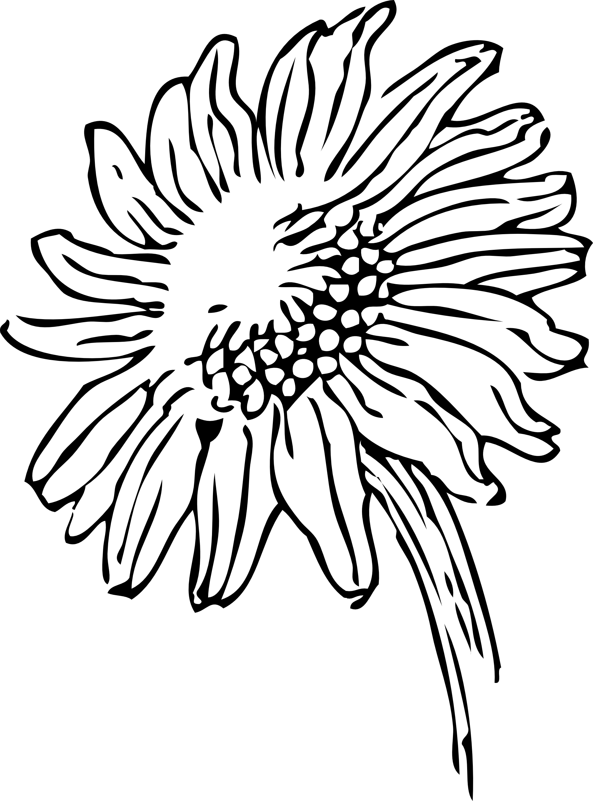 Art Line Drawings - ClipArt Best
