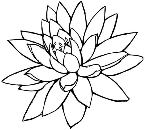 Flower In Line Drawing : Lotus flower line drawing clipart best