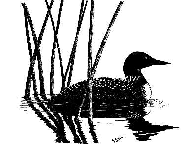 Loon silhouette