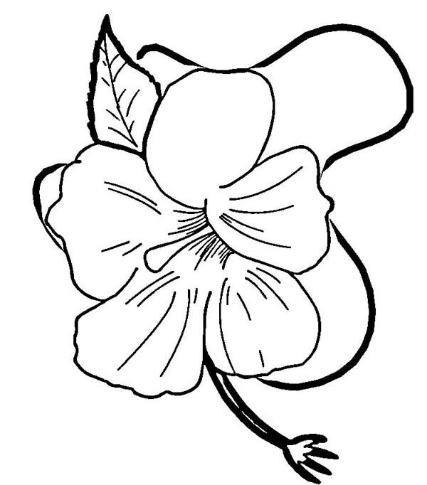 Coloring Pages Of Hibiscus Flowers : Hibiscus flower coloring page clipart best