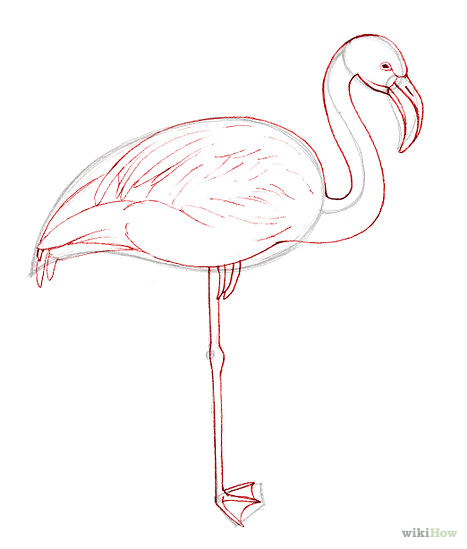 Flamingo Outline Drawings