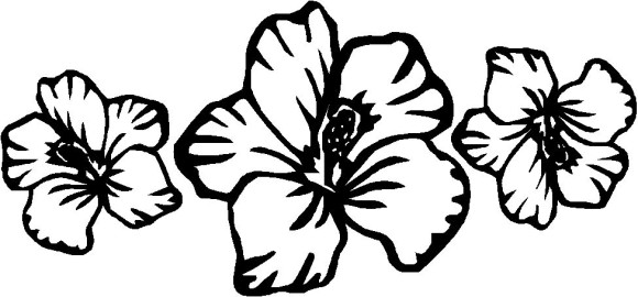printable hibiscus coloring pages - hawaiian flower drawing clipart best
