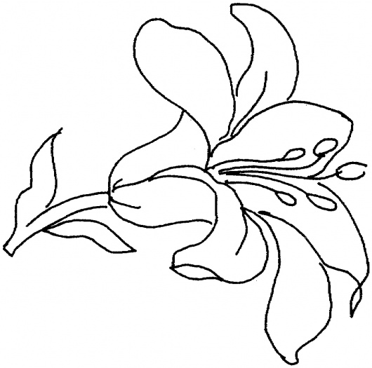 lily coloring book pages - photo#17