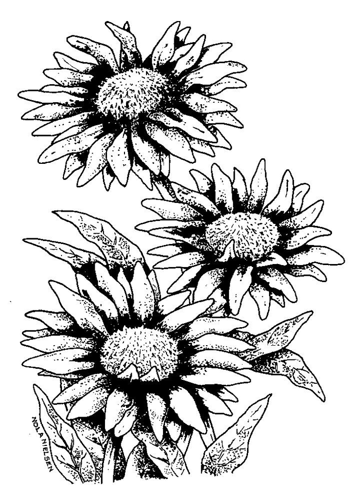 Line Drawing Flowers Blossom : Line drawing flower clipart best