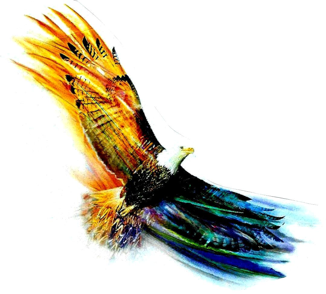 Picture Of Eagle Soaring - ClipArt Best