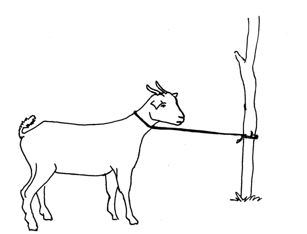 Line Drawing Goat : Line drawing of a goat clipart best