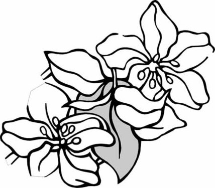 Narcissus Flower Drawing