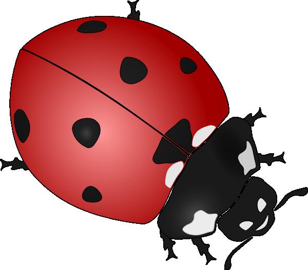 Clip Art Of A Ladybug