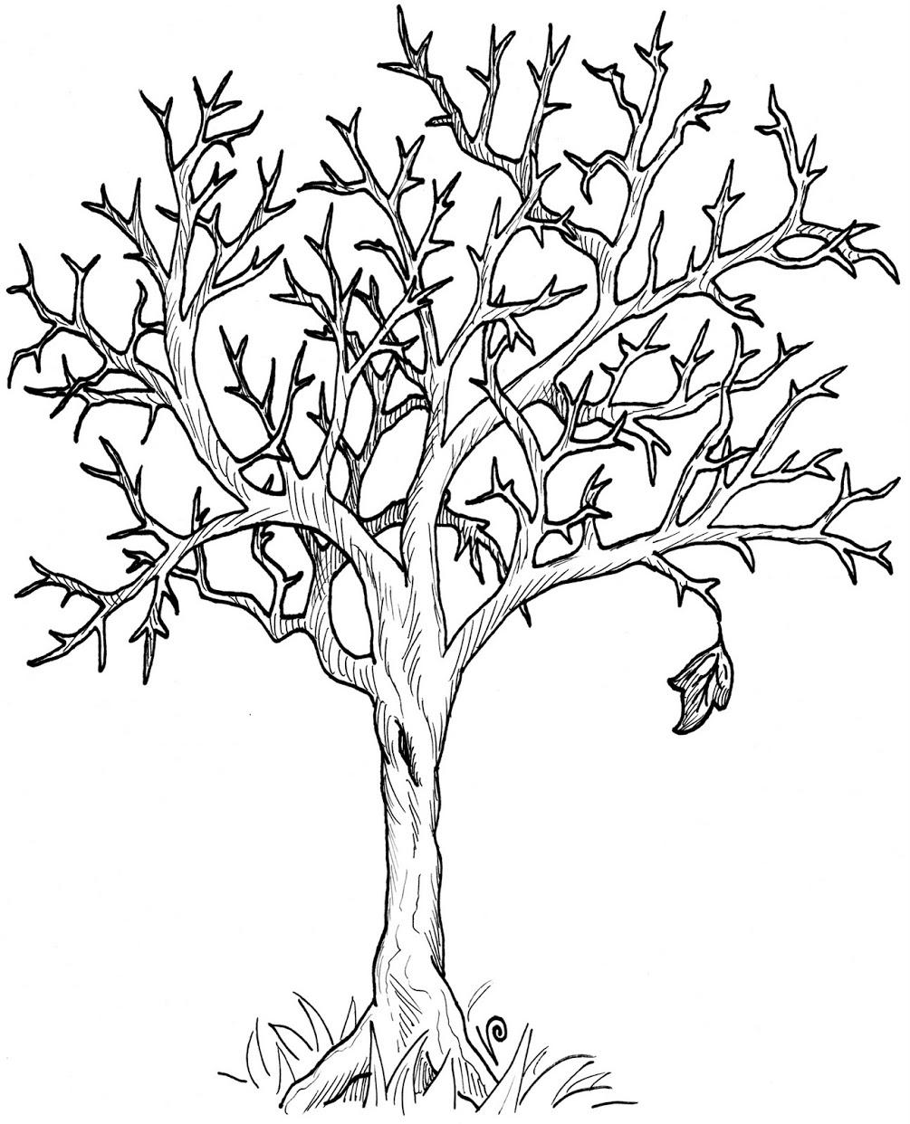 Line Art Of Tree : Line art tree clipart best