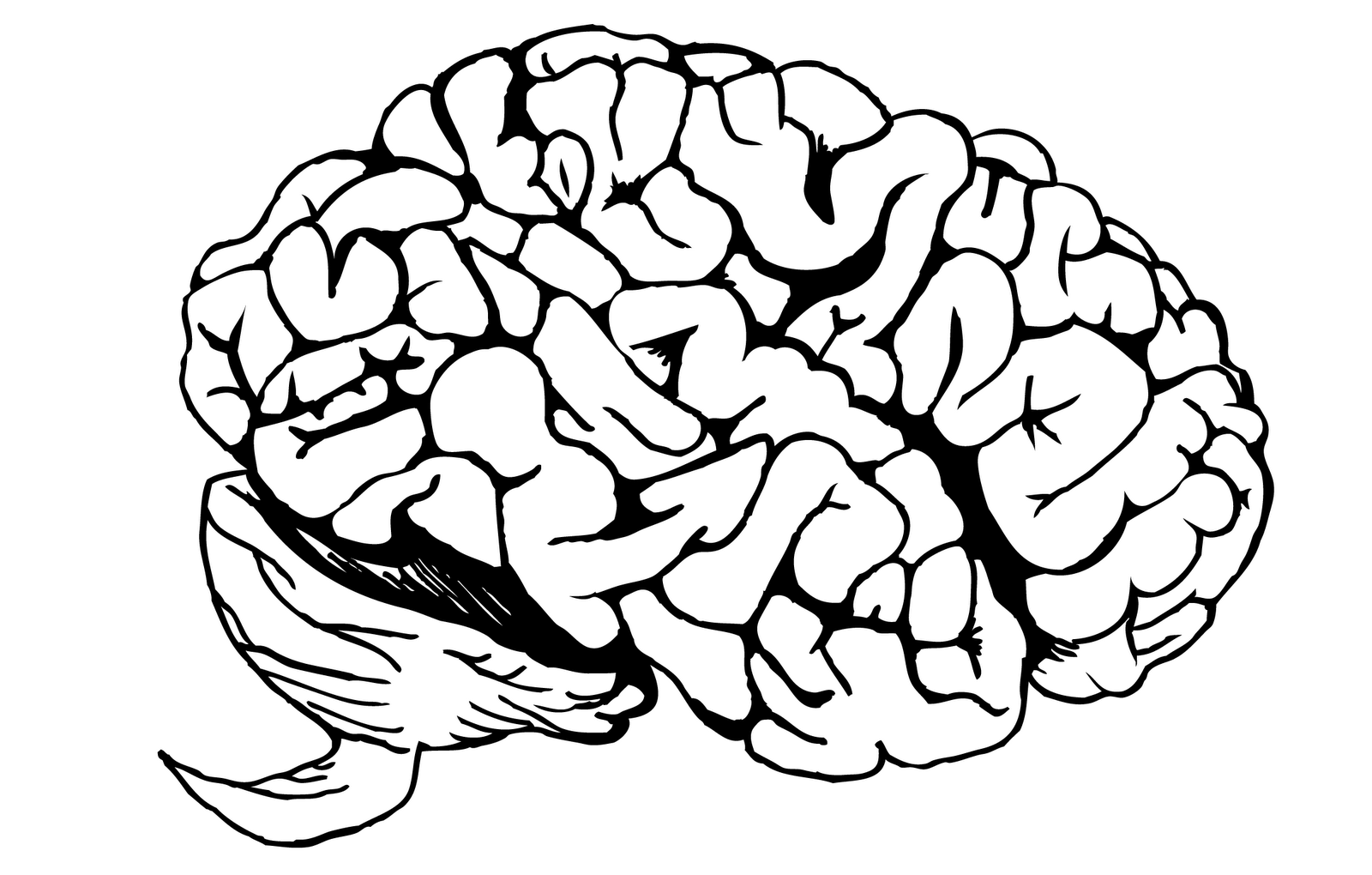 Line Drawing Brain : Brain line drawing clipart best