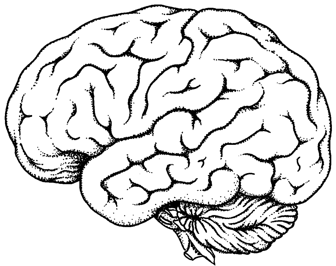 brain outline drawing - photo #2