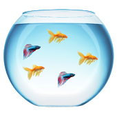 Pictures of fish bowls clipart best for Easiest fish to care for in a bowl