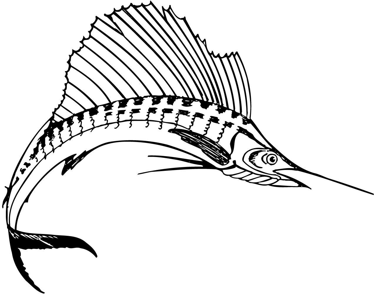 Sailfish Clipart