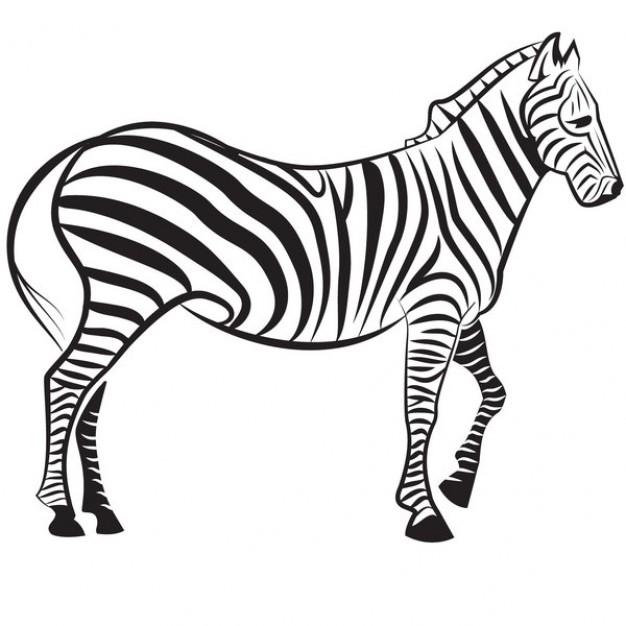 clipart zebra images - photo #47