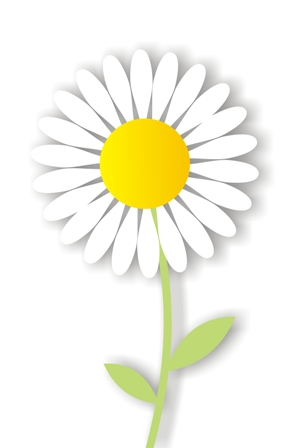 different types of daisies | types of daisy flowers | daisy clipart