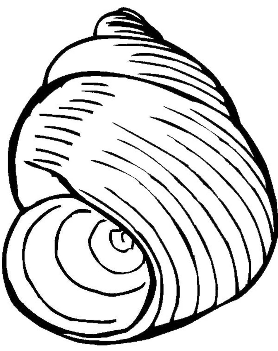 Printable seashells clipart best for Sea shell coloring pages