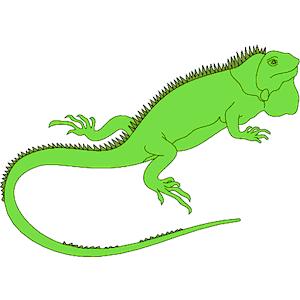 iguana clip art clipart best