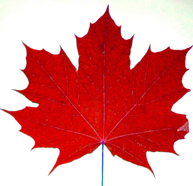 Canadian Maple Leaf Logo - ClipArt Best