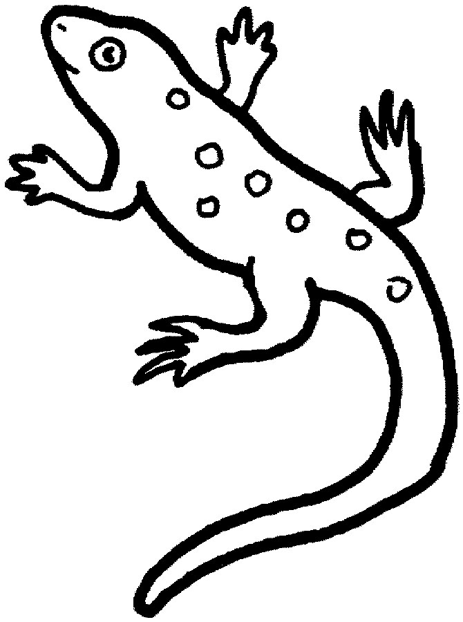 Line Drawing Lizard : Lizard outline template clipart best