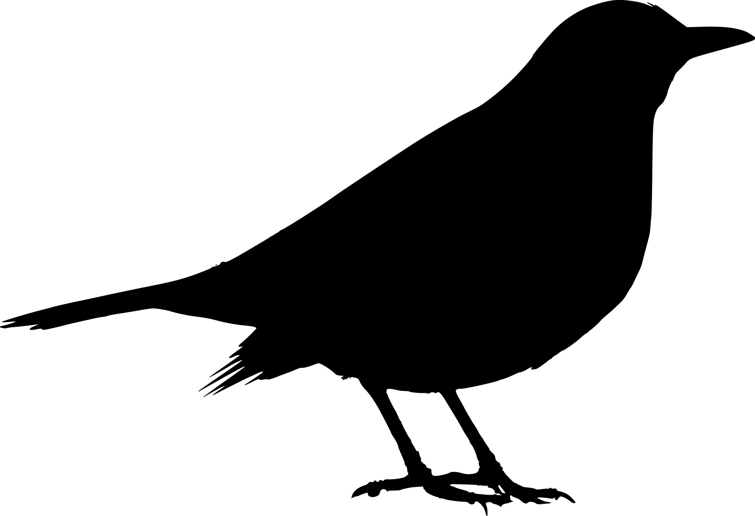 black bird silhouette clipart best