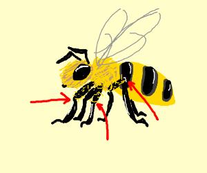 Bees Knees - ClipArt Best