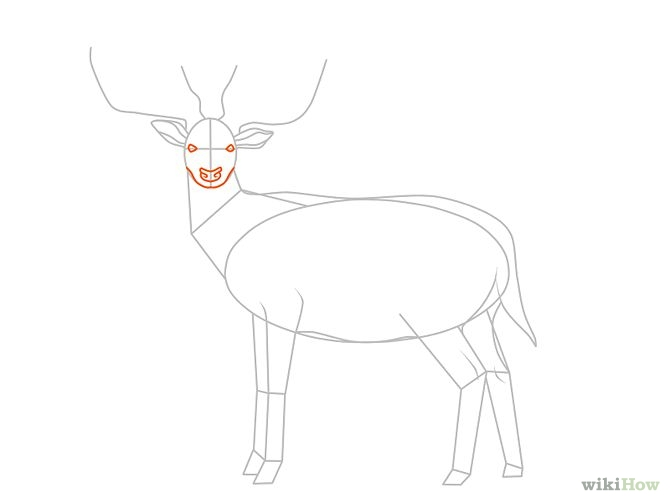 how to draw a simple deer