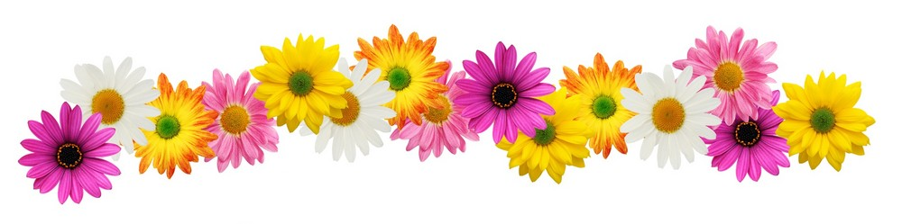27 spring borders clip art free free cliparts that you can download to    Spring Page Border Clipart