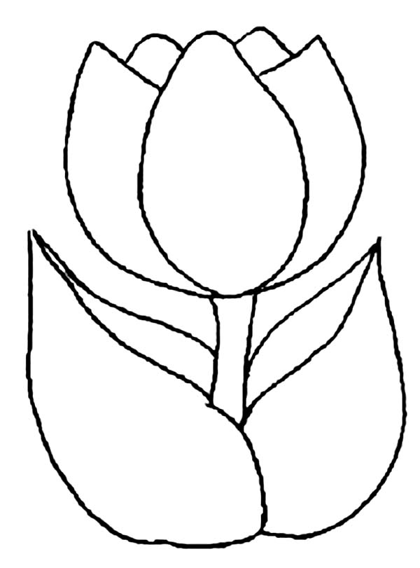 Tulip Line Drawing Clipart Best