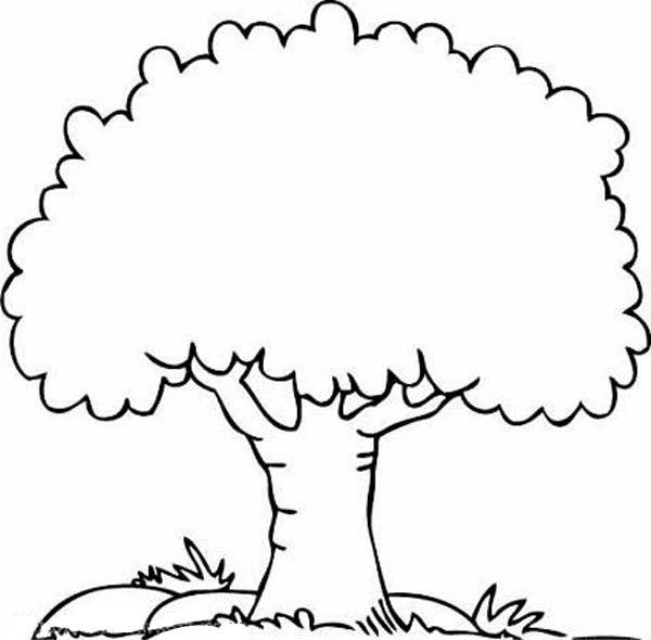 Дерево раскраска цветная