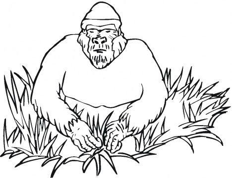 gorillas coloring pages super coloring