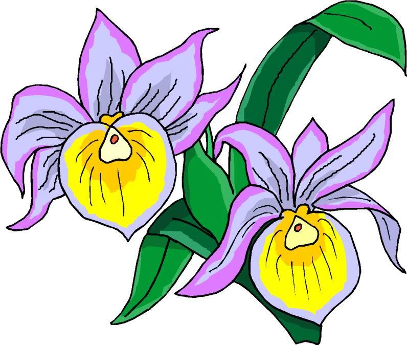bing free clip art flowers - photo #11