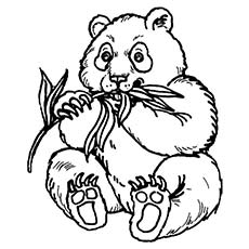 Panda Bear Coloring Pages ClipArt