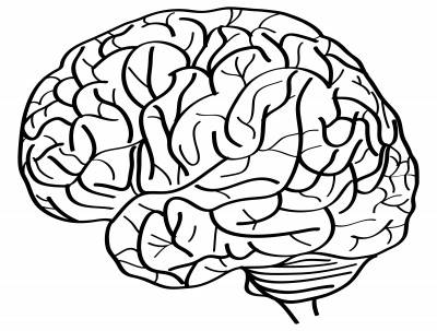 Brain Drawing Top View Brain Line Drawing Top How to