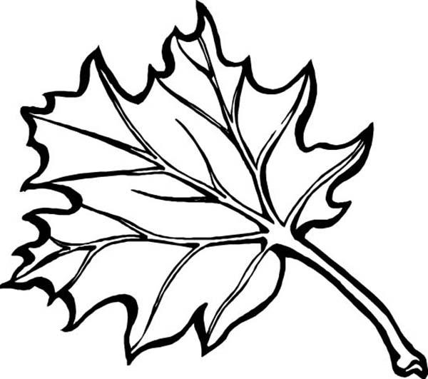 Maple Leaf Coloring