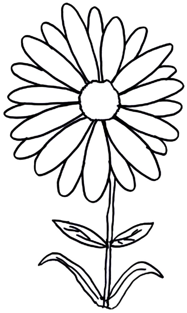 flower drawing coloring pages - photo#27