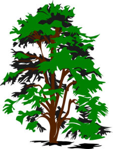 redwood tree clip art free . Free cliparts that you can download to ...