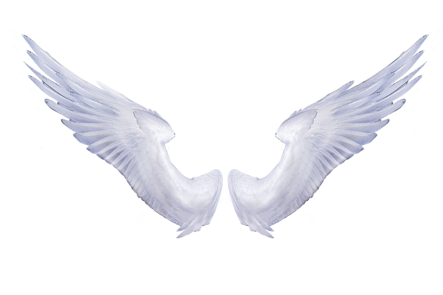 White Angel Wings 1 by...