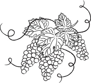 Pictures outline of grapes clipart best for Vine and branches coloring page