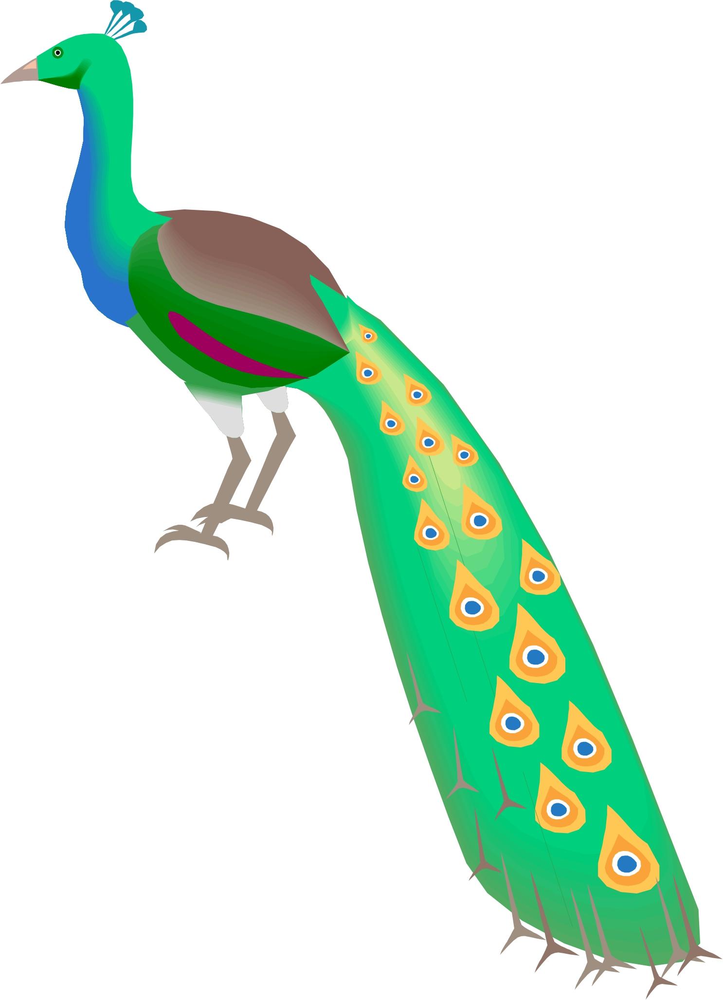 Peacock Cartoon - ClipArt Best