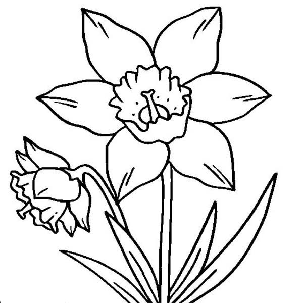 Vase of Flowers coloring page  Free Printable Coloring Pages