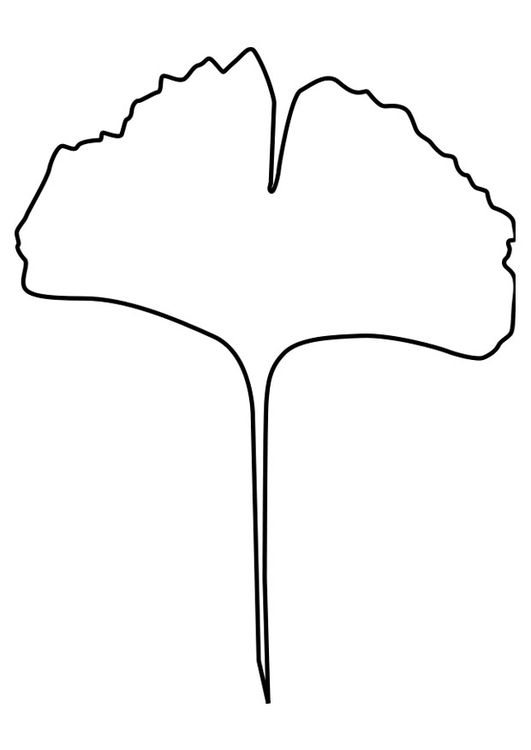 beech tree coloring pages - photo#17
