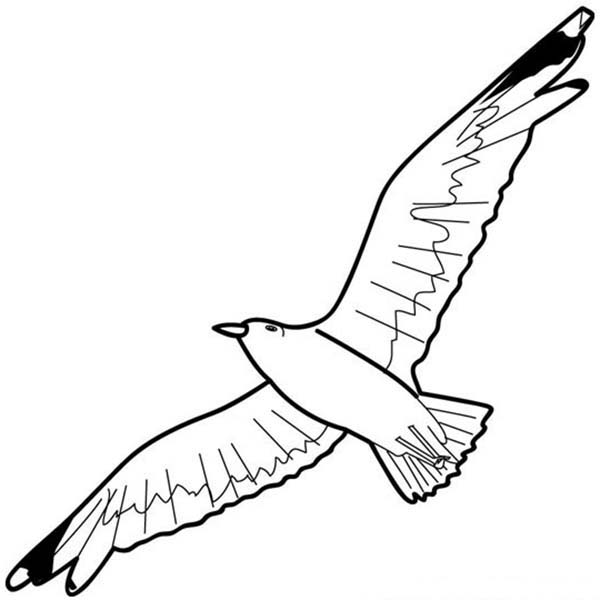 Image Gallery Seagull Drawing