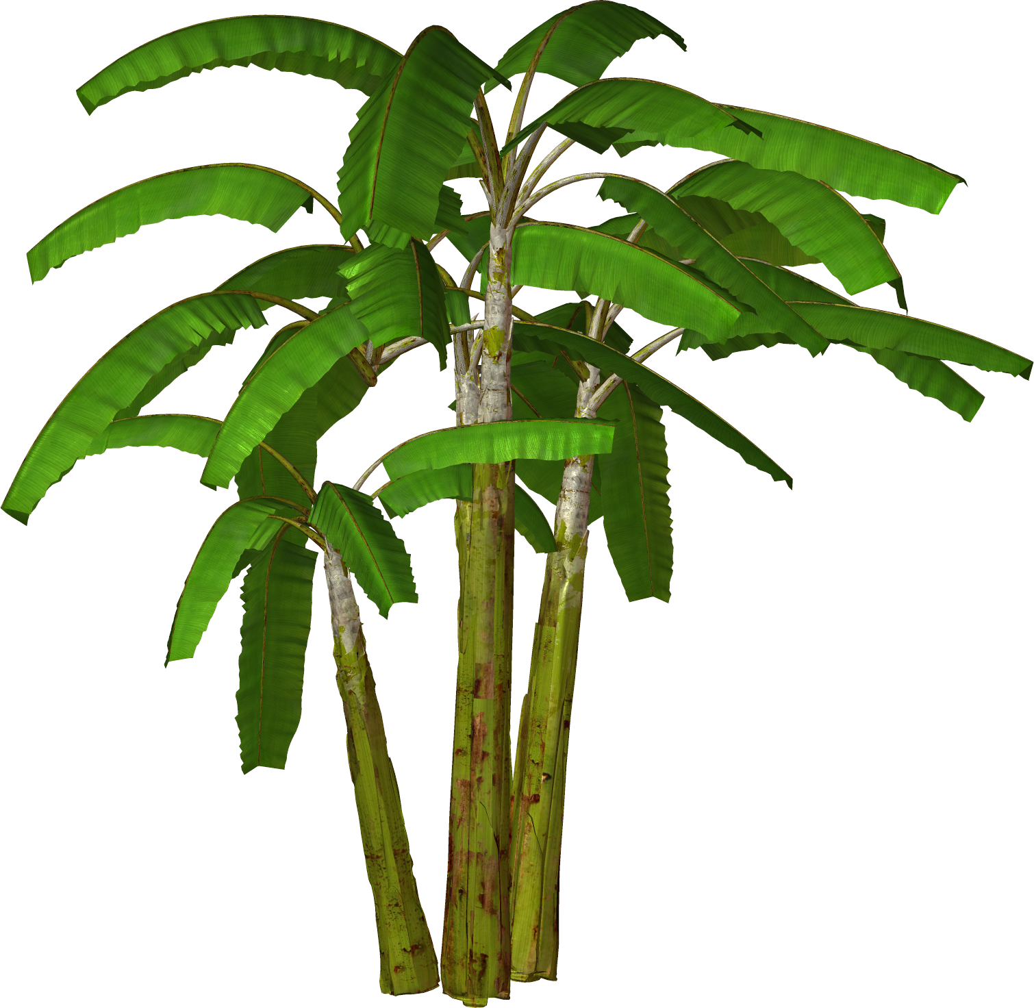 Free High Resolution graphics and clip art: Palm tree and free png ...