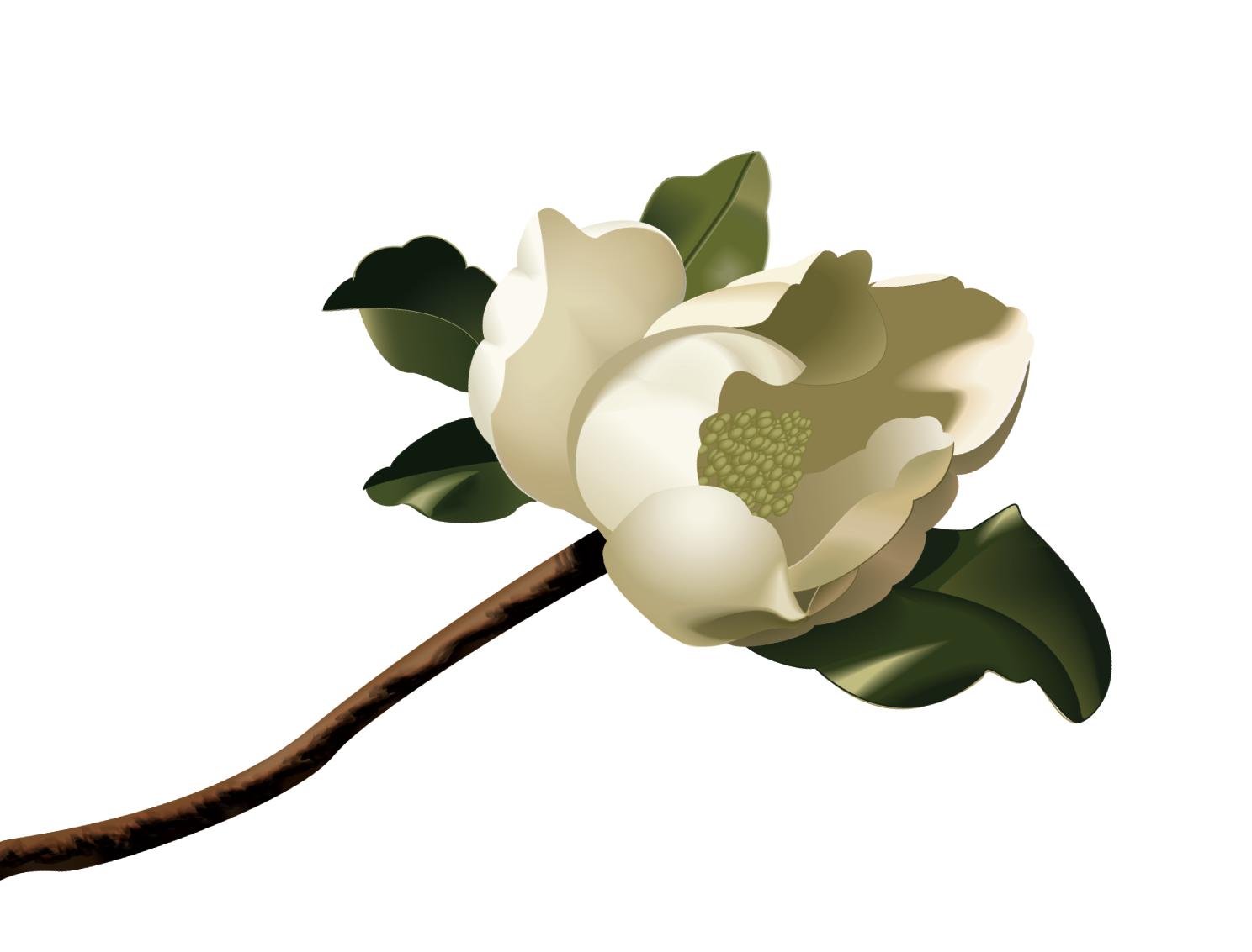 magnolia branch clip art - photo #15