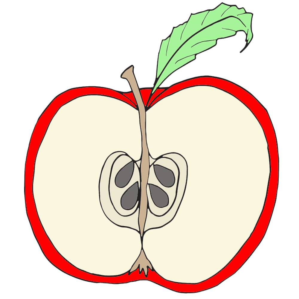 Cross Section Of Apple Clipart Best