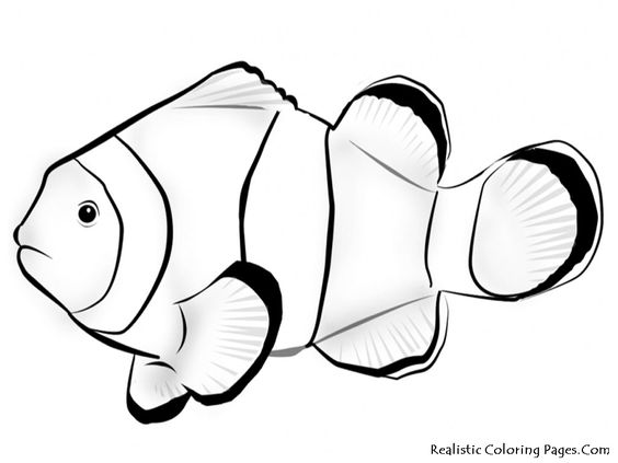 Tropical Fish Outline Clipart Best