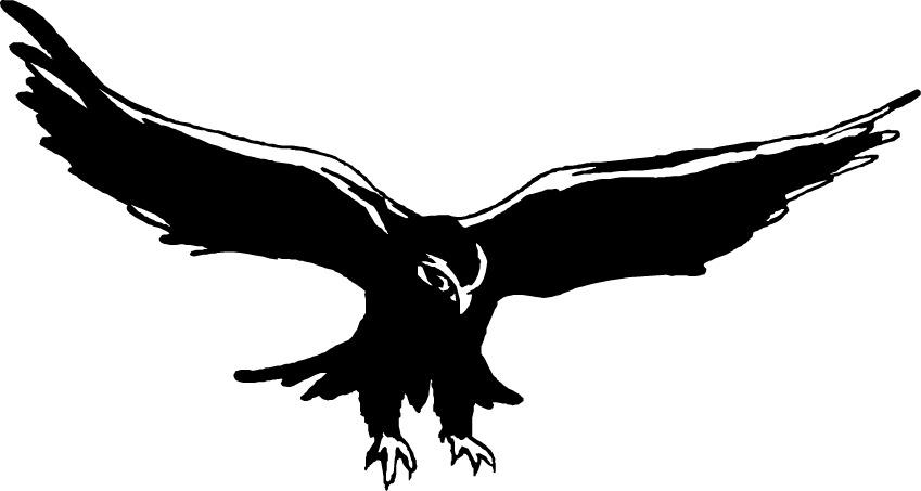 Falcon graphic - photo#18